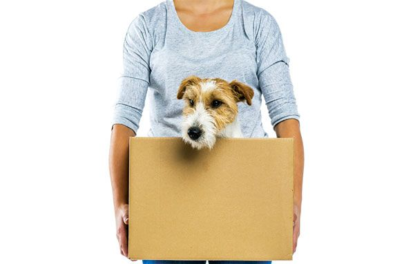 Pet Moving Tips preparing them for a new home