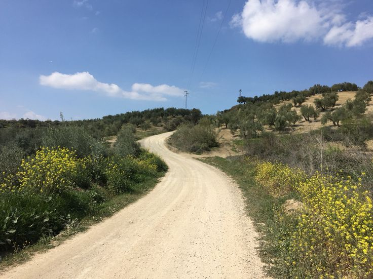 Passing through olives groves (again) ;)