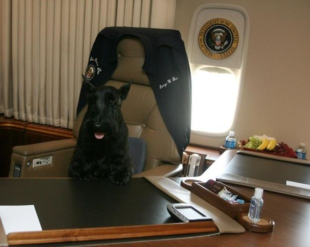 Barney on Air Force 1.. He obviously understands that having dogs do people things is the funniest thing. | 15 Reasons George W. Bush Should Come Work For BuzzFeed Animals