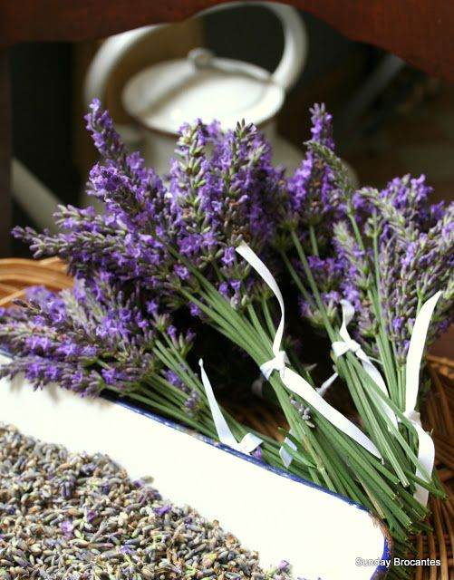 French Lavender heaven ....Sunday Brocantes...: ~ French ~ Lavender