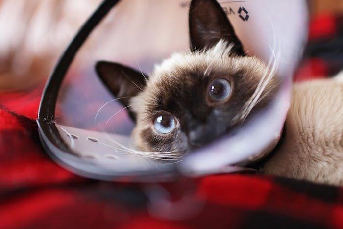 1001 Lustige Katzenbilder Und Katzenspruche Lustige Katzenbilder Katzen Bilder Katzenbilder