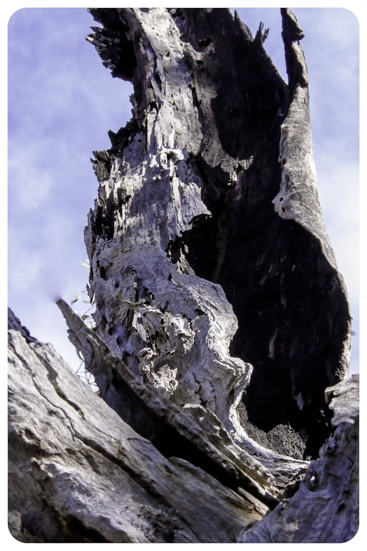 Tree Bark at Dog Rocks....