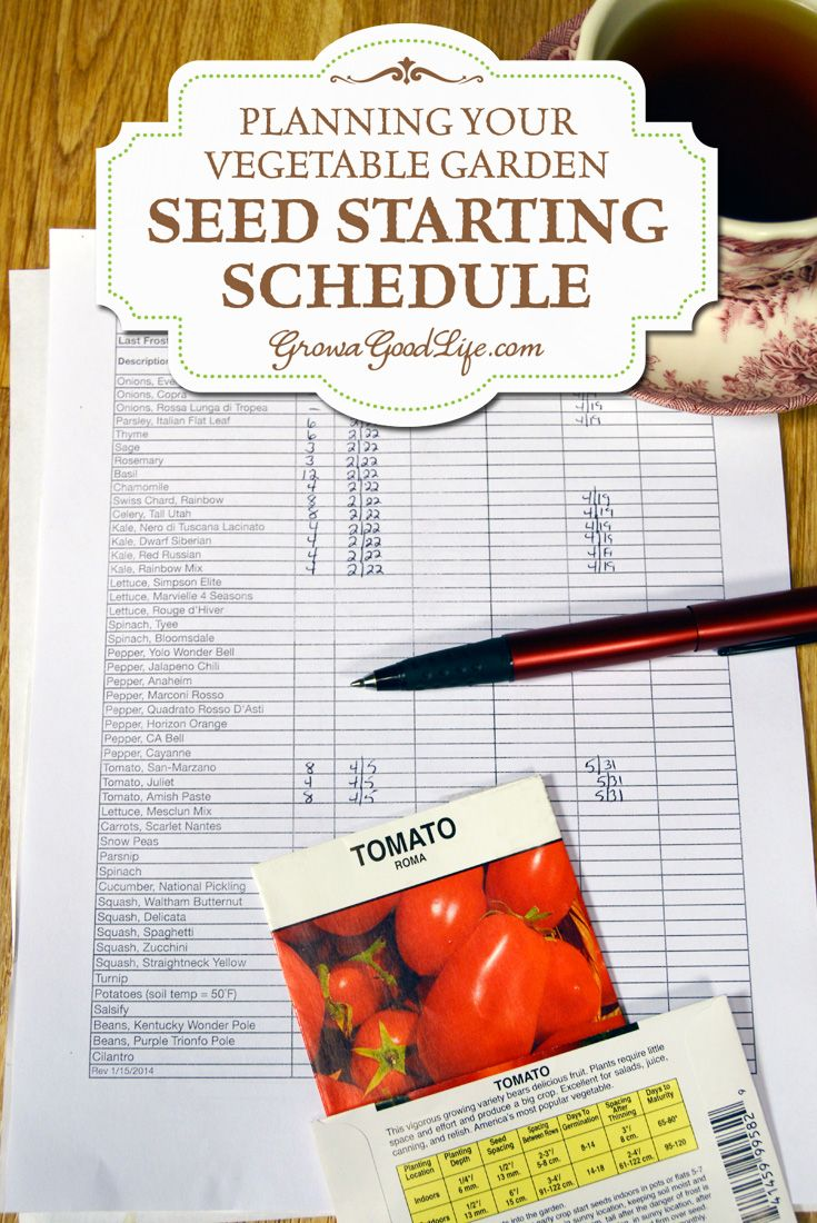 Develop a seed starting schedule so you know the optimum time to start your seeds. A seed-starting schedule provides a guideline of when to sow seeds and when to transplant seedlings the vegetable garden. Lucy xxx