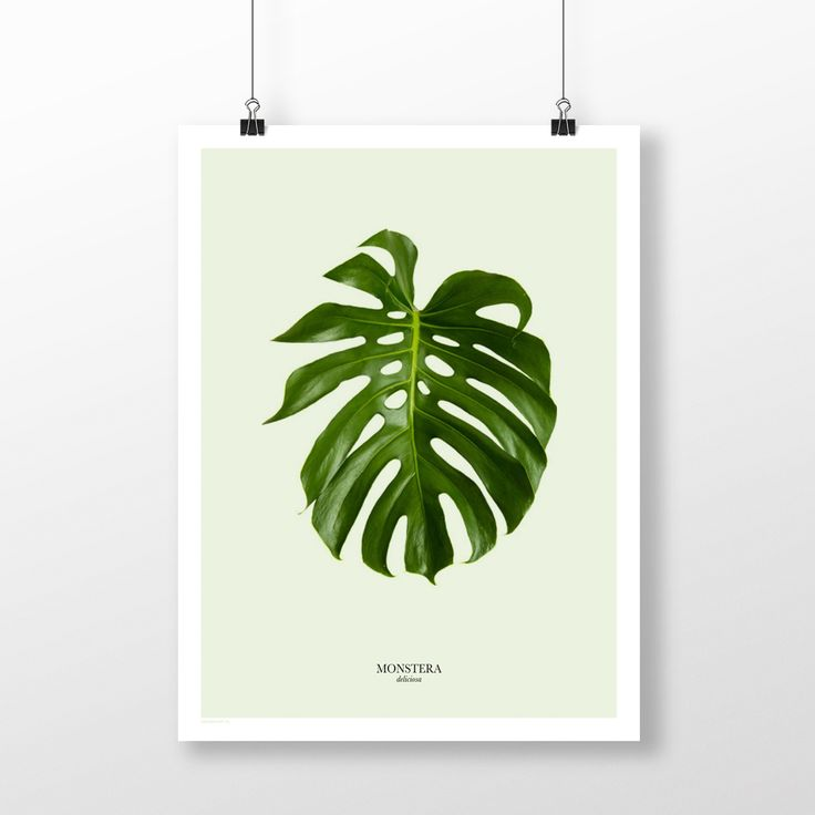 Plakat: Monstera green