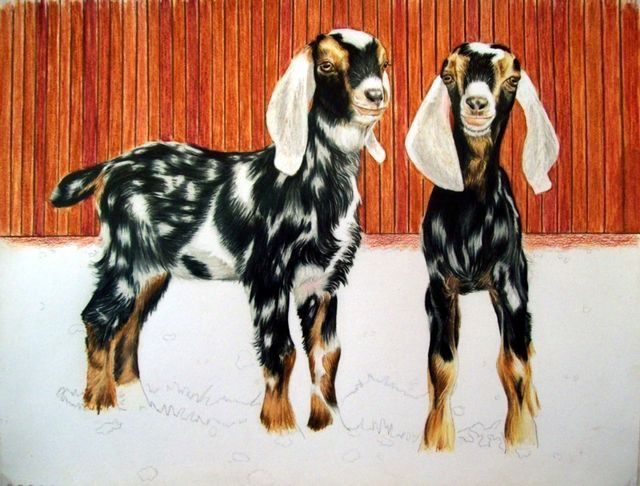 Painting of 2 baby Nubians. Love the spots! -A