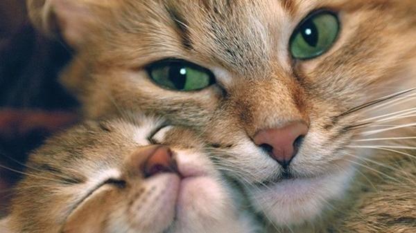 Фото животных: трогательные мамы и их забавные дети https://joinfo.ua/curious/1212573_Foto-zhivotnih-trogatelnie-mami-zabavnie-deti.html
