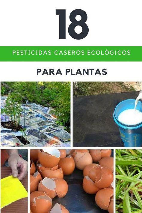 18 Pesticidas, Insecticidas, repelentes y fungicidas caseros ecológicos para plantas.
