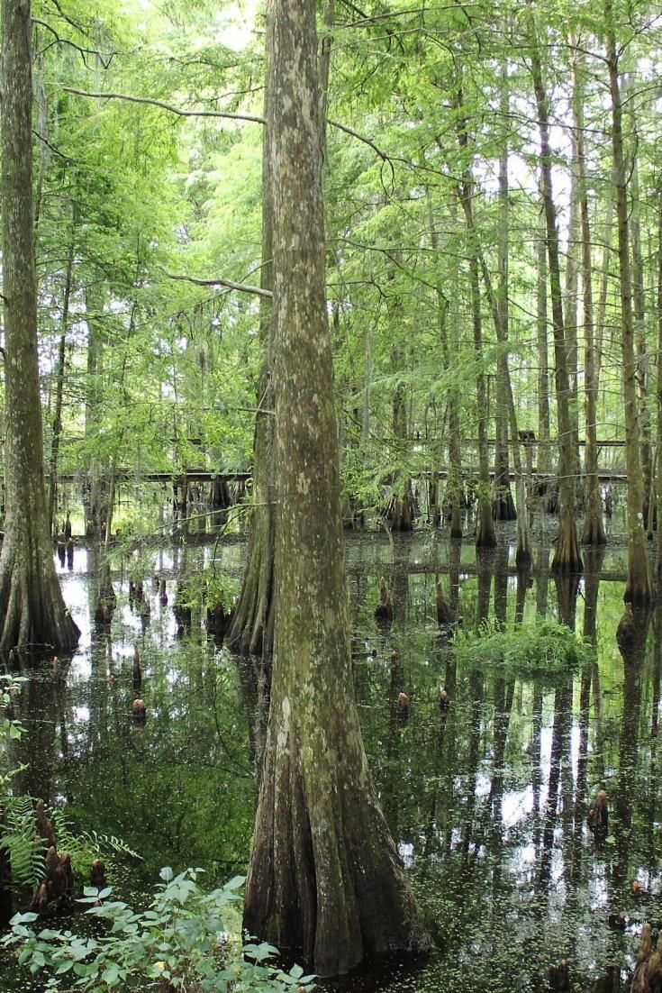 Floride: 10 activités pour découvrir Kissimmee et ses environs (PHOTOS)