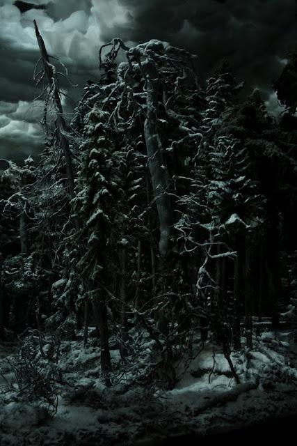 Jussi Kivi - Ars Fennica installation: Dead spruce - dead pine, installation view (detail)