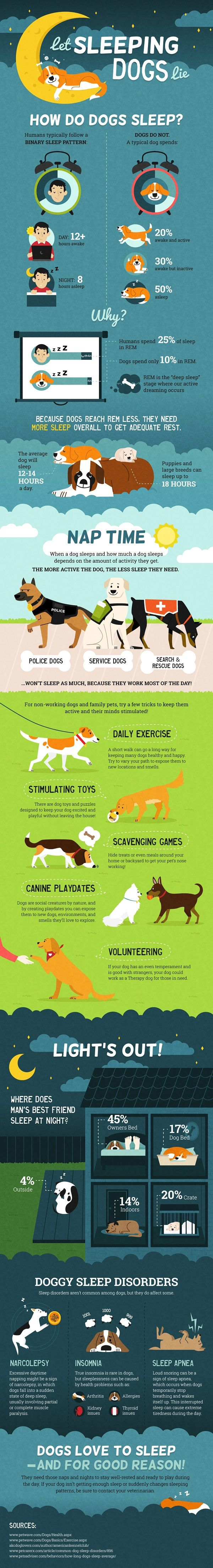 When a dog sleeps and how much a dog sleeps depends on the amount of activity they get. The more active the dog, the less sleep they need.: