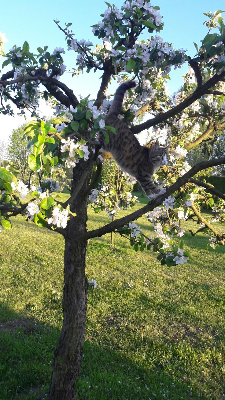 Koteczka na jabłoni