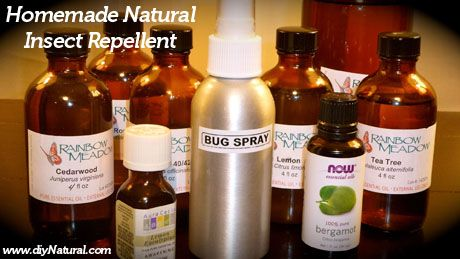 Need to try this!Insects Repel Homemade, Homemade Insects, Nature Insects, Essential Oils, Nature Bugs Sprays, Health, Homemade Nature, Diy, Deets Free
