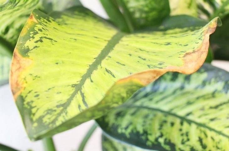 Картинки растений желтые пятна
