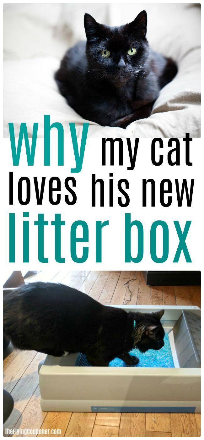 My Cat Loves Scoopfree Original Self Cleaning Litter Box Cat Love Cat Training Litter Box Litter Box