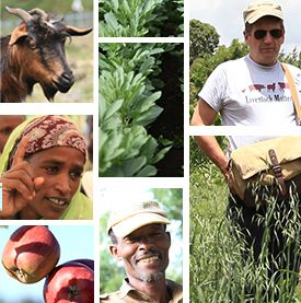 Africa Research in Sustainable Intensification for the Next Generation