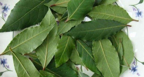 Tratament cu frunze de varza pentru varice - Venele mărite la picioare