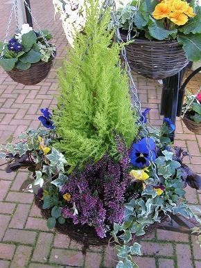 Winter Hanging Basket Heather Ivy Pansies Backyard Ideas Pinterest Baskets And Garden