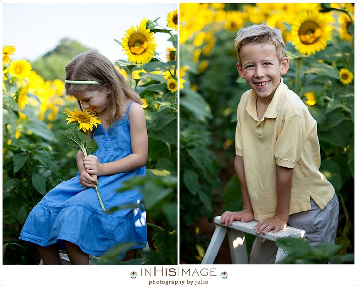 17 Best Images About Sunflower Photos On Pinterest