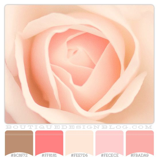 Sweet Rose Petals coral, pink and cream color scheme - Boutique Design Studio