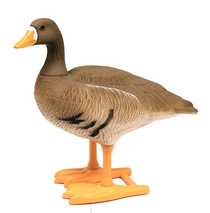 BigFoot B2 Full Body Specklebelly Goose Decoys. Whether you're specifically targeting specks or just mixing them in with Canadas or snows, these decoys add realism and depth to your spread.
