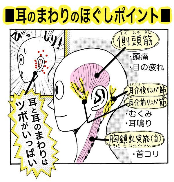 本格的な冬の寒さになり、外に出ると耳が冷えてちぎれそうに痛い……!首コリや脳の活性化にも効果的な、かんたん「耳ほぐし」で頭部から温まってみませんか!?耳には毛細血管が通っていますが、とても細く血液の量...