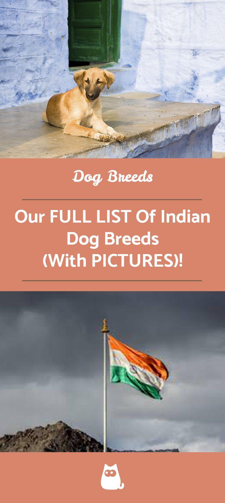 Indian Breeds Of Dog List With Pictures Dog Breeds List Dog List Breeds