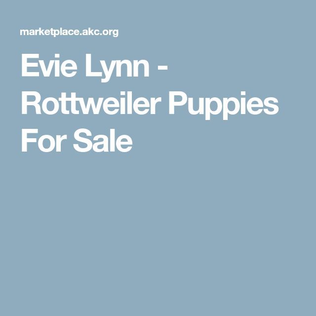Evie Lynn - Rottweiler Puppies For Sale