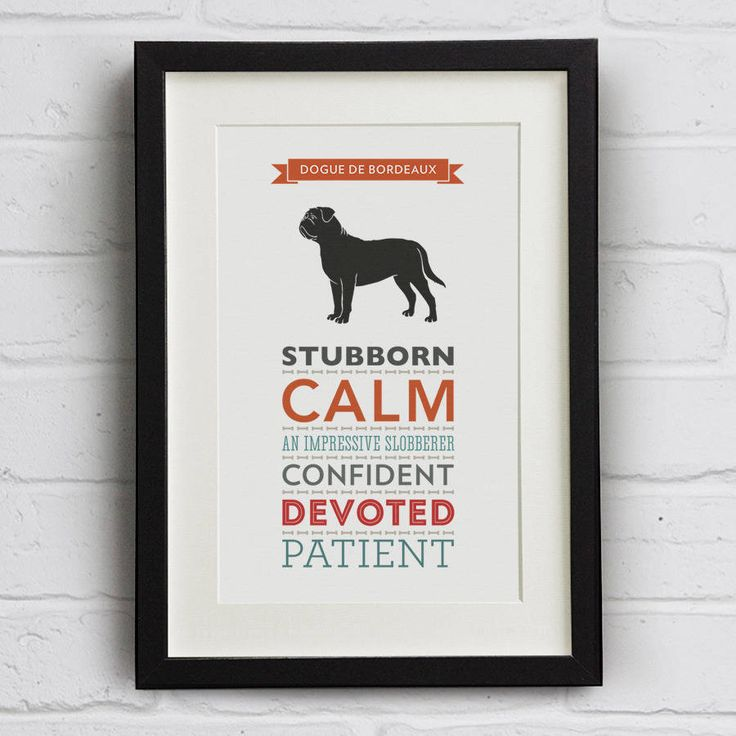 A lovely typography print featuring the name and illustration of a Dogue de Bordeaux and its traits.Available unframed only - with or without mount. The main image showing the framed print is for display purposes only. Off the shelf frames to fit this standard size A4 print are available in many high street stores.As well as the Dogue de Bordeaux we have many more breeds available and we regularly add new dogs. Each design features an illustration of the dog in silhouette and six different…