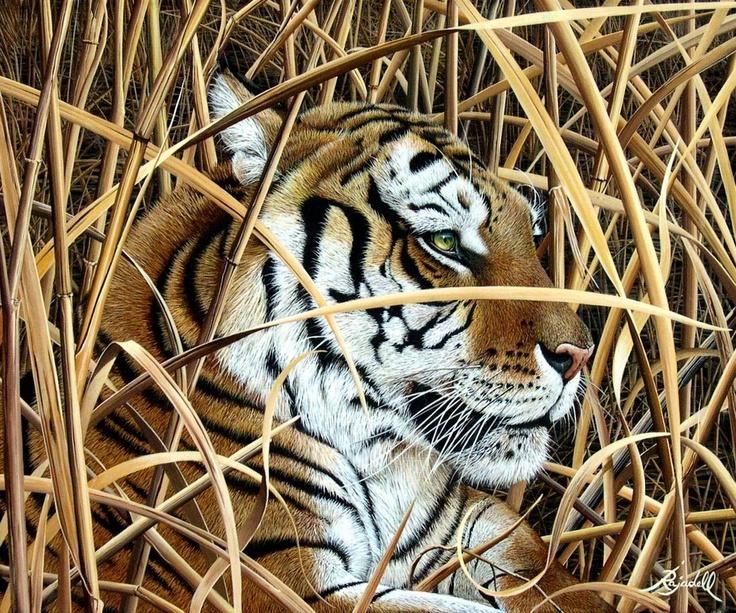 Jorge Rajadell - Artista plasticoRajadel Jorge, The Artists, Magnificent Tigers, Artistas Jorge, Artistas Plastico, Artists Color Pink, Animal, Jorge Rajadel
