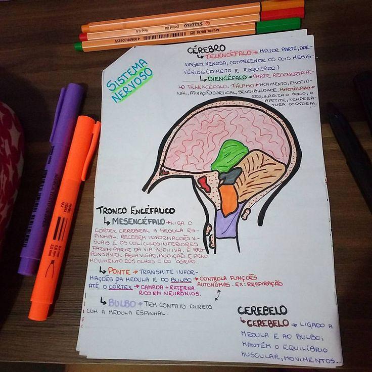 Mapas Mentais, Fisiologia, Estudante De