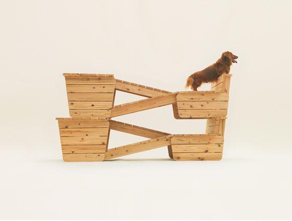 Olha que casinha de cachorro mais fofo. Casinha. (2)
