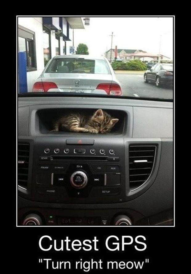 """Driving by PetSmart """"You have arrived"""" Heading to the Vet """"Recalculating route"""""""