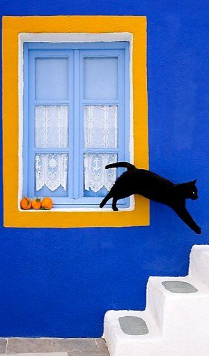 cat jumping off window.. Greece | byKlein-Hubert/KimballStock