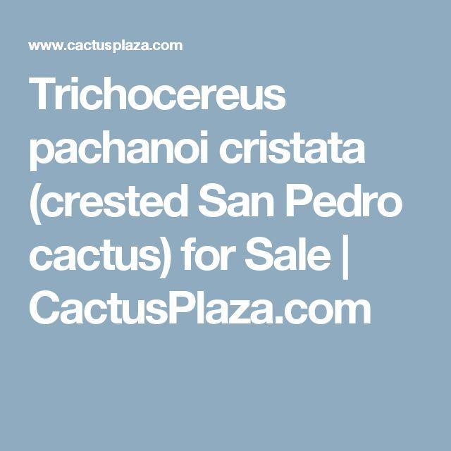 Trichocereus pachanoi cristata (crested San Pedro cactus) for Sale    CactusPlaza.com