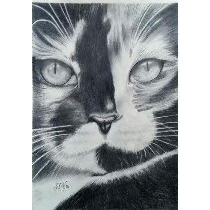 calico #cat