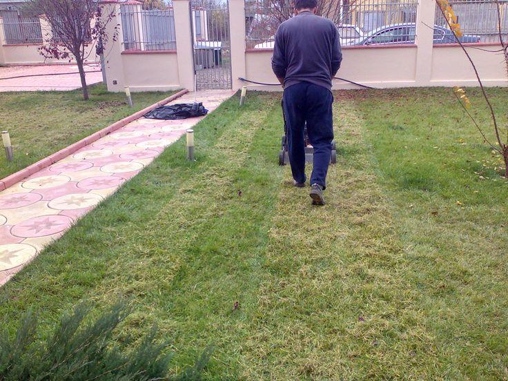 Scarificarea gazonului / Scarifying the lawn