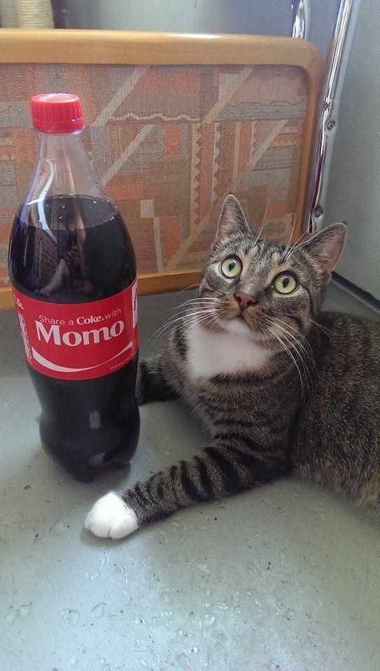 Momo and coca cola!