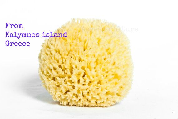 Natural Sea Sponge 5.5'' from Kalymnos by LeFuCycliste on Etsy