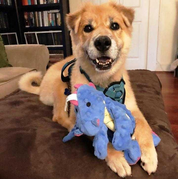 Adopt Susie On Petfinder Dog Adoption Dogs Labrador Retriever Mix