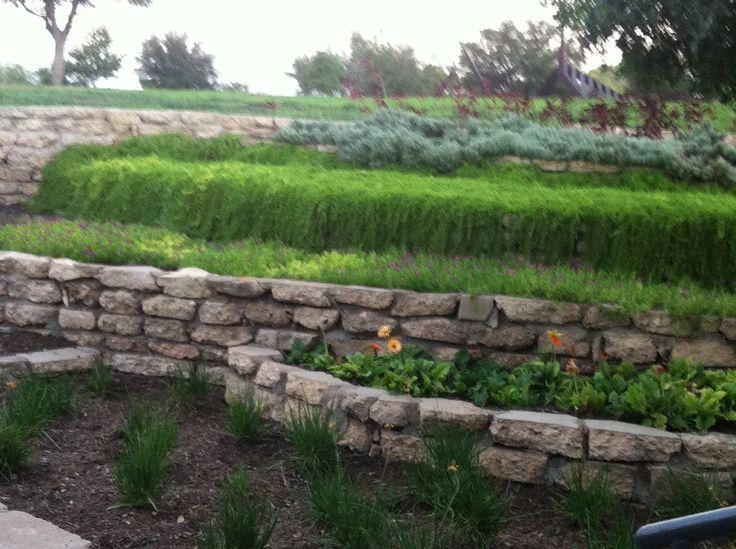 WAter Lilly garden