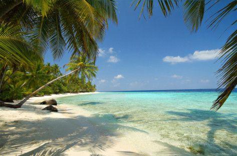 Tropischer Strand mit Palmen Fototapete Wandgemälde bei AllPosters.de