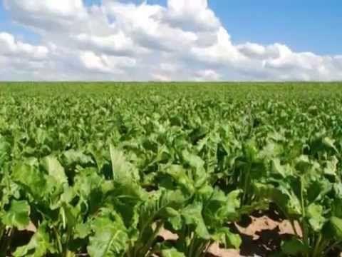 Удобрения и почвообразователи из сапропеля для Грузии