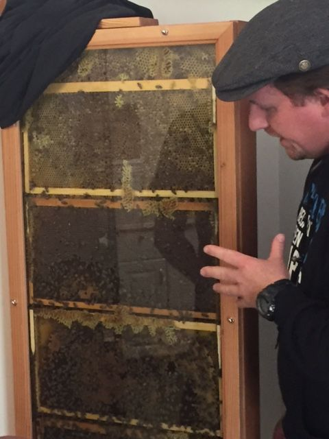 Keith's observation hive