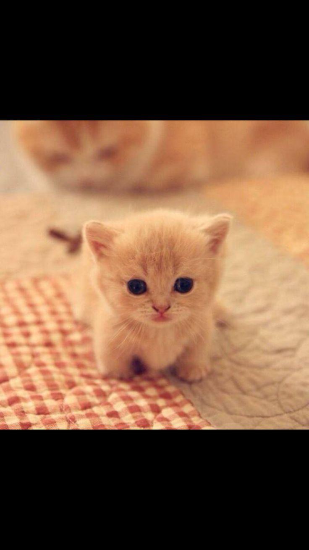 49 best Cute kittens images on Pinterest