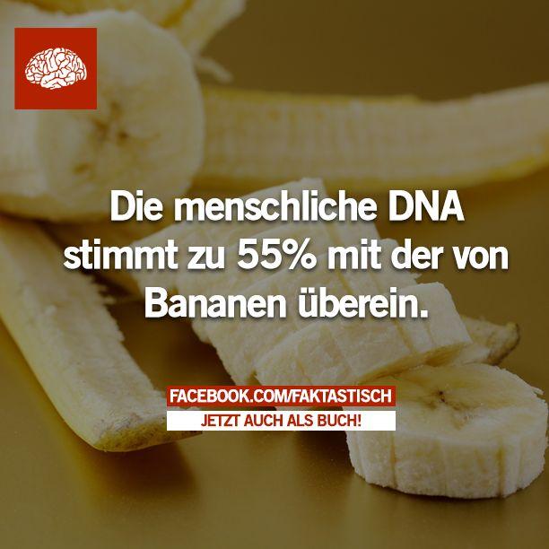 Noch mehr Fakten: faktastisch.net