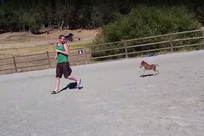 Tiniest Horse Ever That Can't Stop Chasing His Giant Human