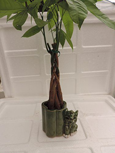 172 best bonsai images on Pinterest   Bonsai, Bonsai trees and ...