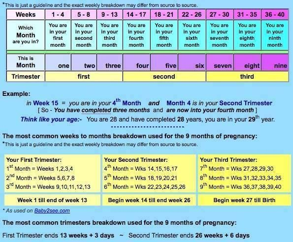 The 25+ Best Trimester Chart Ideas On Pinterest | Baby Growth