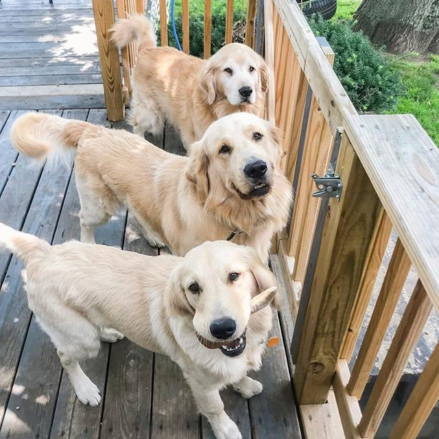 Let Us Out The First Thing Jasperthefriendlygolden