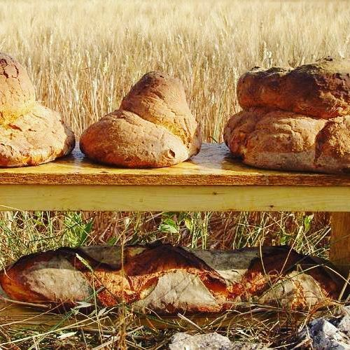"""The """"Pane di Altamura"""" (or Altamura Bread) is one of #Italy's most revered  bead. A thick-and-crispy on the outside, soft-and-golden on the inside bread made from local durum flour. It is a popular dish throughout #Puglia and a well-known specialty in #Lecce."""